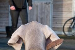 Hond Blake (Weimaraner)