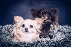 Twee poserende hondjes